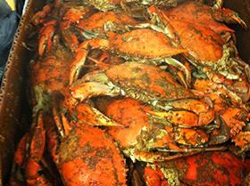 Captain Dan's Crabs